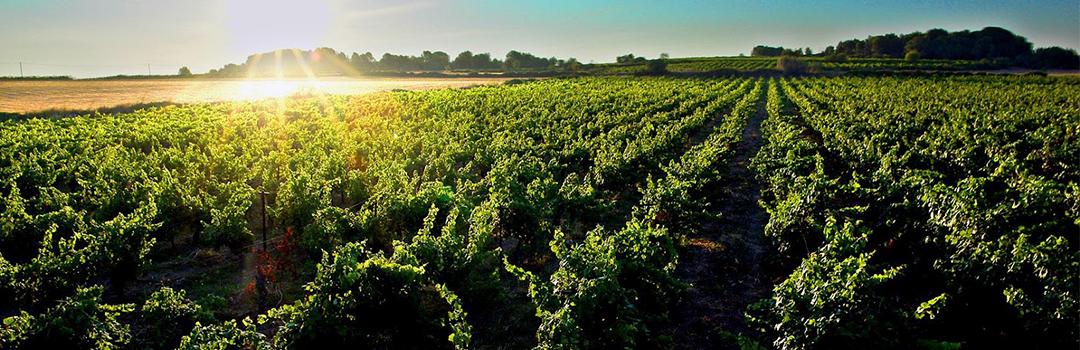 La Bonne Cave - Vignoble et vins