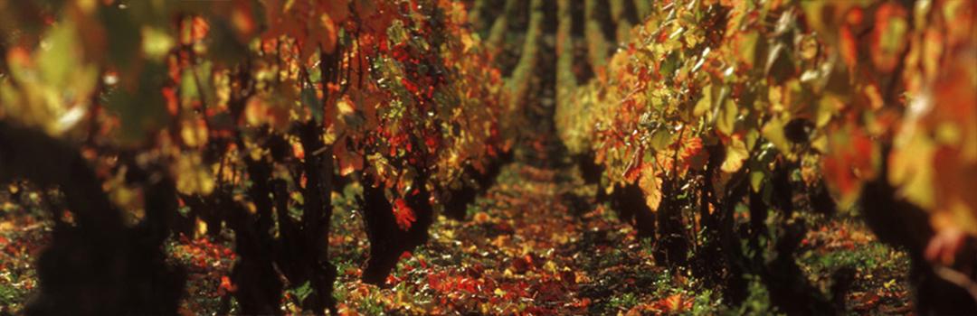 La Bonne Cave : des vins d'exception